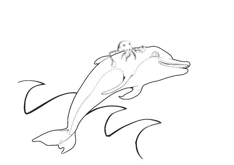 Coloring sheet Dolphin Download .  Print