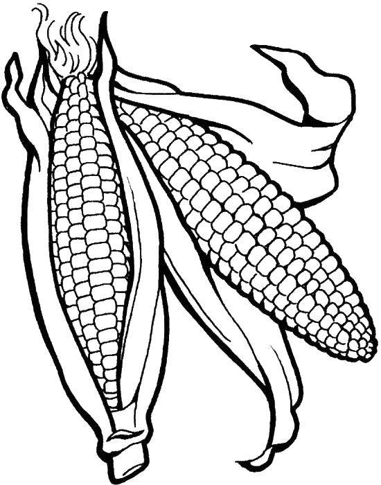 C is for Corn Coloring Page - Twisty Noodle | 700x550
