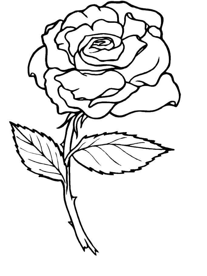 Coloring sheet flowers Download technique, robot.  Print ,Technique,