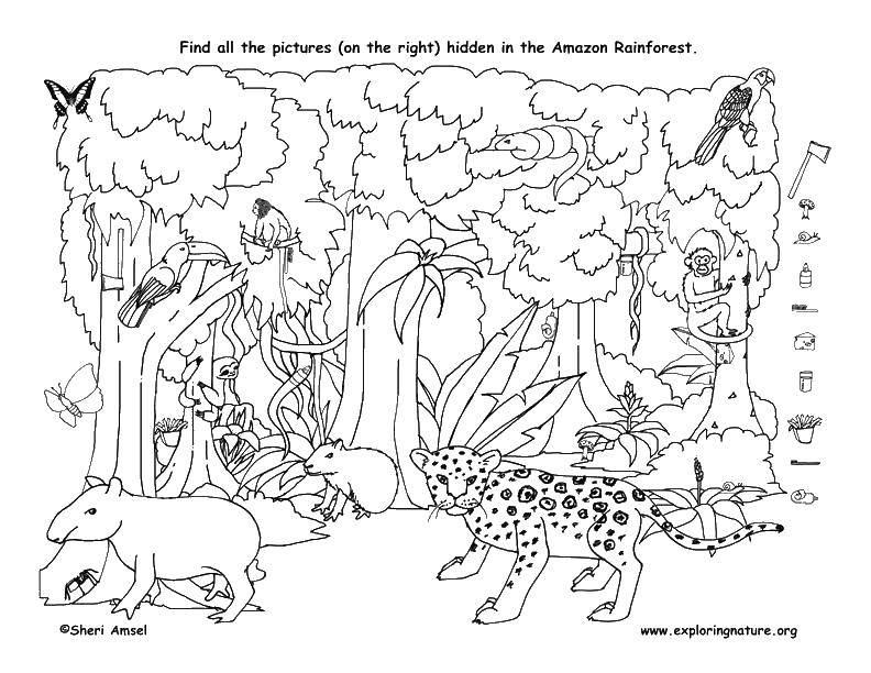 Название: Раскраска Звери амазонки. Категория: Найди предметы. Теги: тир, пеликан, обезьяна.
