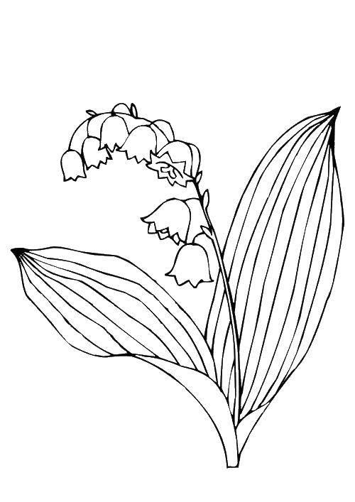 Раскраска ландыш Скачать ,цветы, ландыши,.  Распечатать