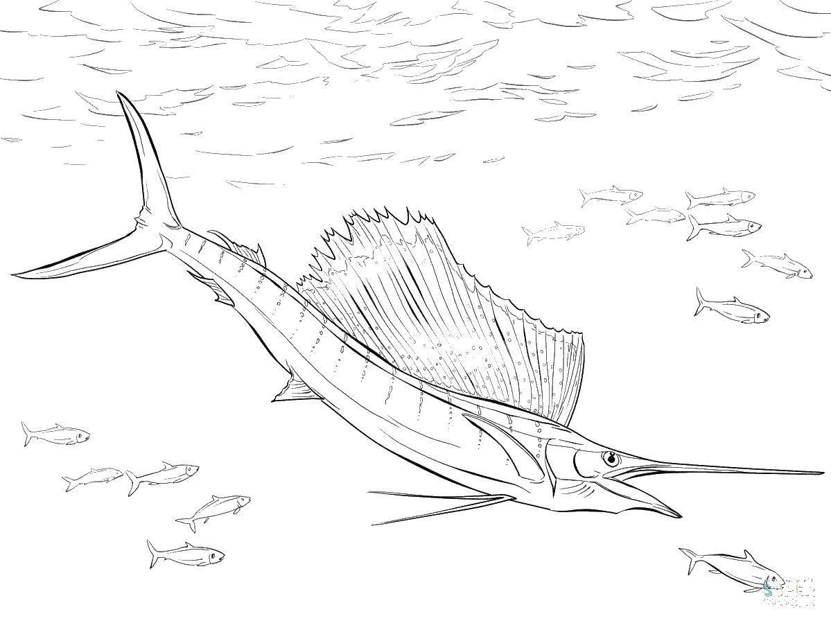 Раскраска рыба меч Скачать ,рыба меч, плавник, хвост,.  Распечатать