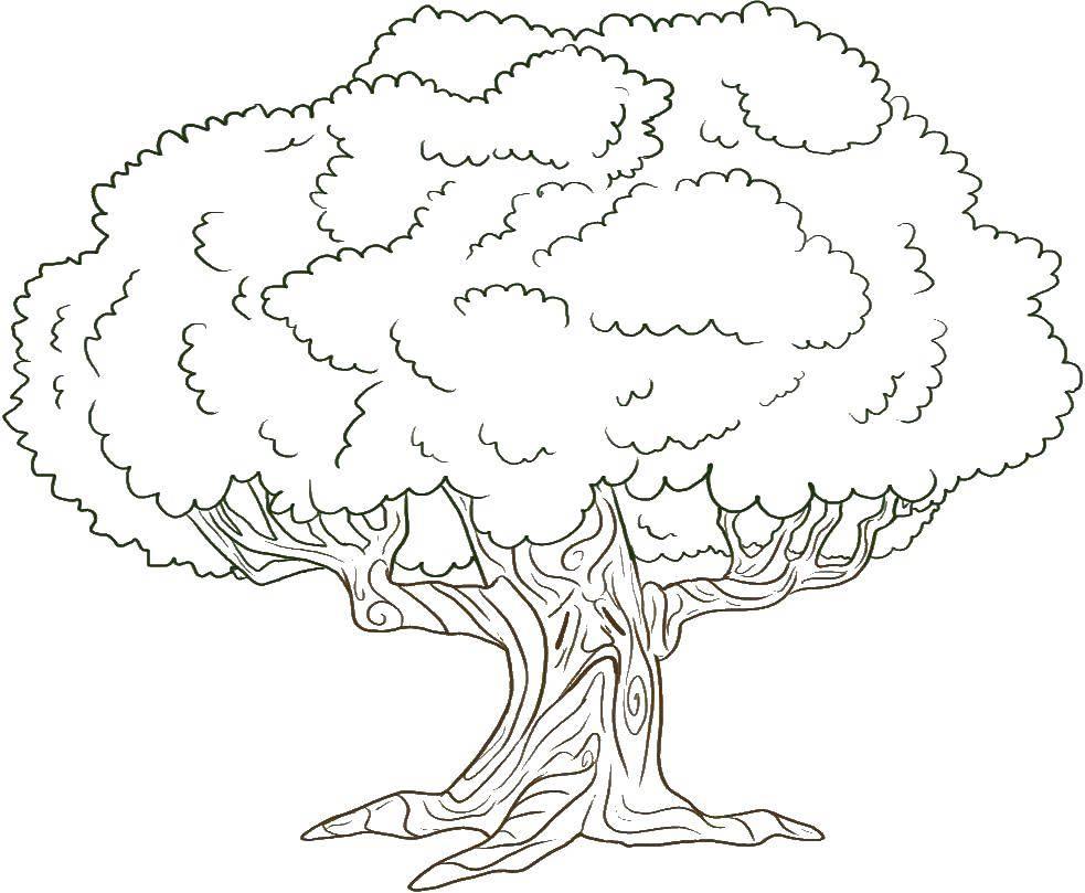 Раскраски нарисованное, Раскраска Нарисованное дерево дерево.