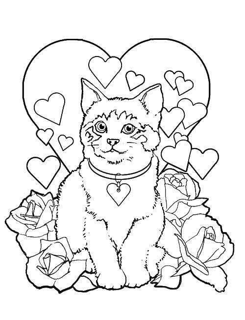 Раскраски розами, Раскраска Котик на фоне сердца с розами ...